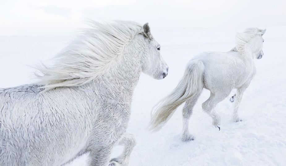 chia cheval