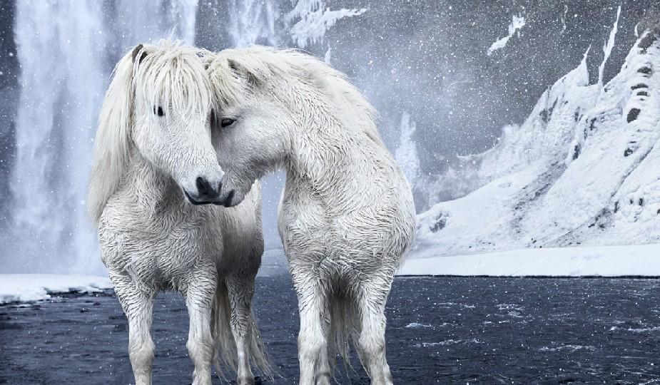 chia pour cheval